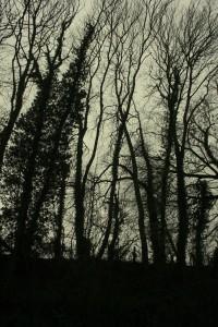 Tree watchers edited 2